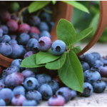 Incredible Health Benefits of Blueberries