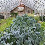 4 Unique Types of Farms